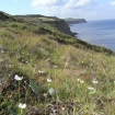grass-of-parnassus-on-cliff