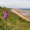 Common spotted orchid and view into Saltburn