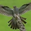wildlife_in_actionwinner_angel_of_the_north_mark_bowen5