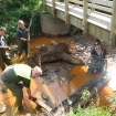 Volunteers clearing stream