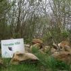 Minibeast habitats