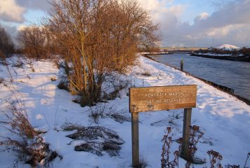 Snow at Portrack Marsh