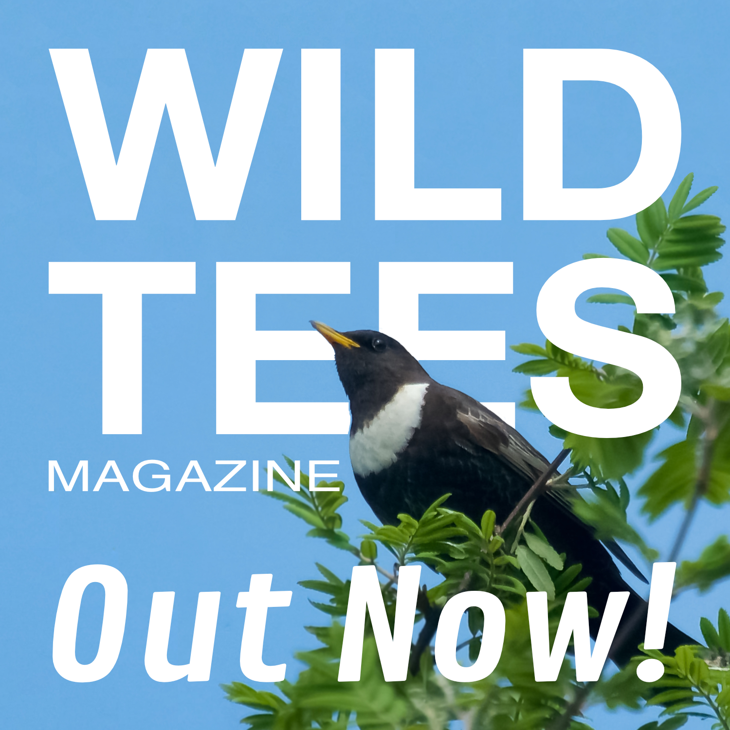 WILD TEES COVER