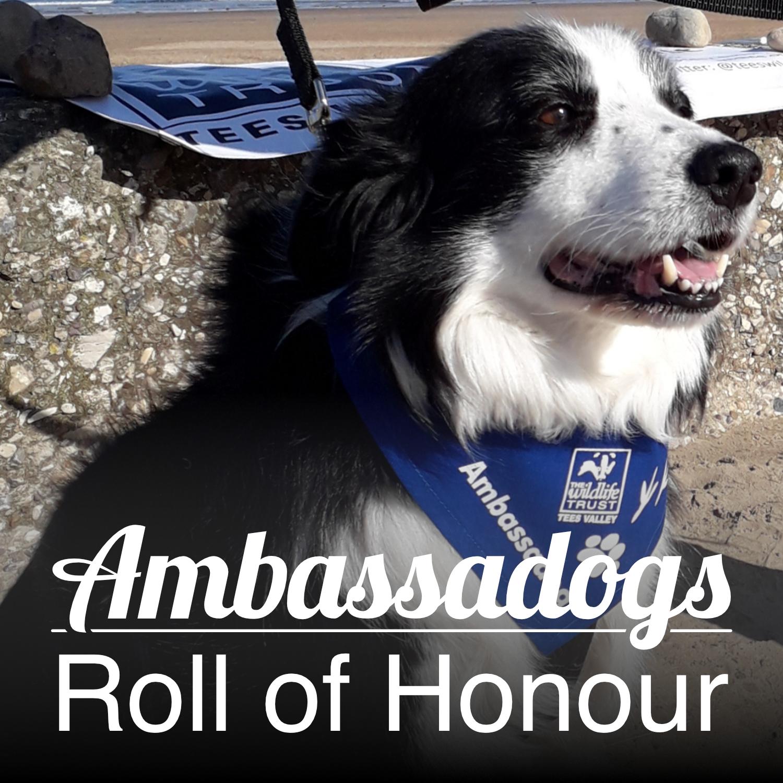 Do you own an Ambassadog?
