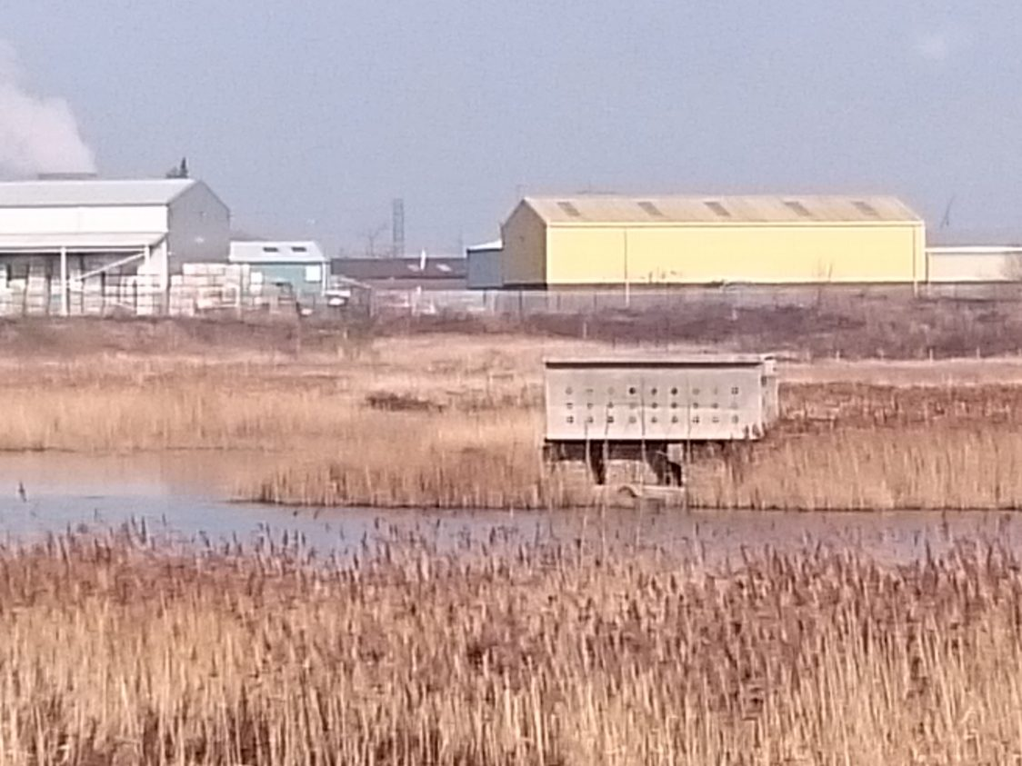 A view across the water to the artificial sand martin bank.
