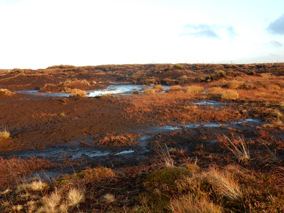 Degraded peatland, Yorkshire (c) Beth Thomas