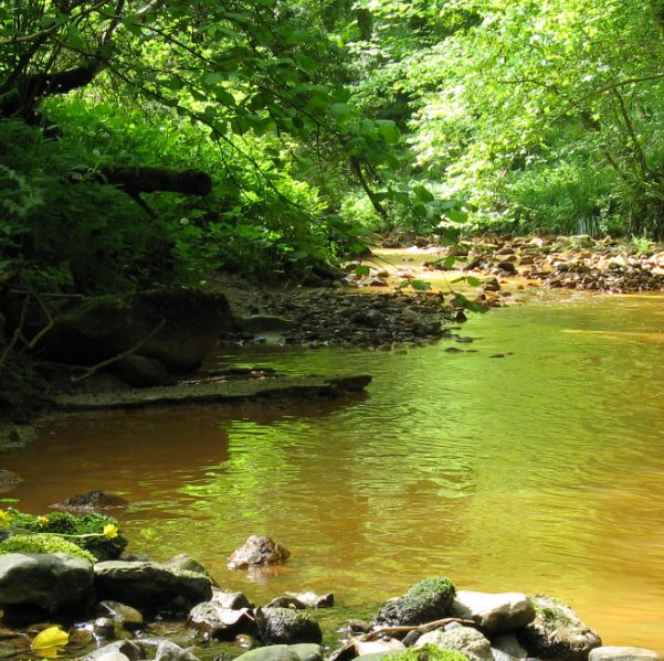 A photo of Saltburn Gill. Taken from low down near the relatively calm waters. Rocks have built up against the bank on the left hand side of the image. A geological outcrop is visible to the right side of the stream. The water is orange from iron discharge. There is a lot of green on the river banks from ferns, ramsons, hazel and ash trees.