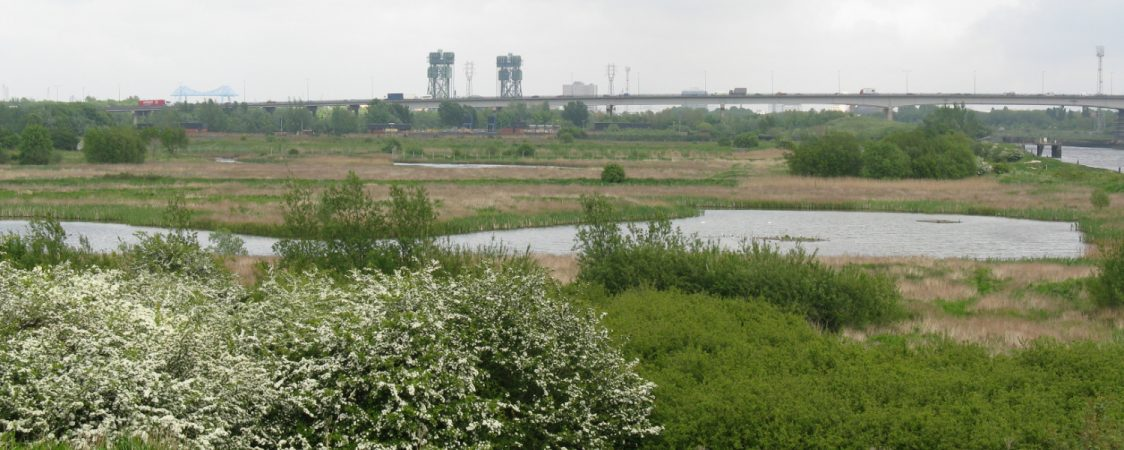 A view over Portrack Marsh. Hawthorne is in flower in the foreground. The A19 and Newport Bridge are both visible in the background.