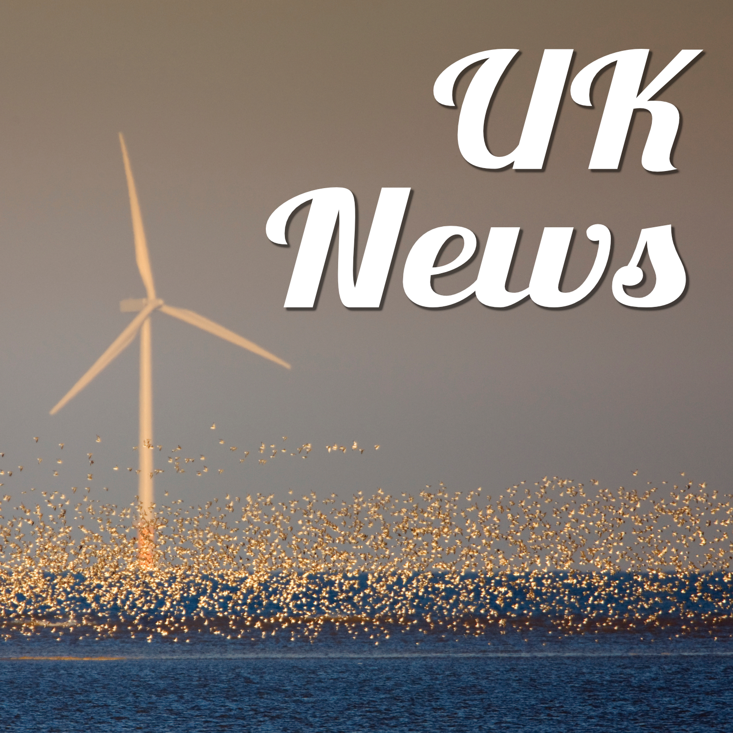Photo of an off-shore wind turbine with a multitude of seabirds flying just above the blue sea. Text reads 'UK news'.