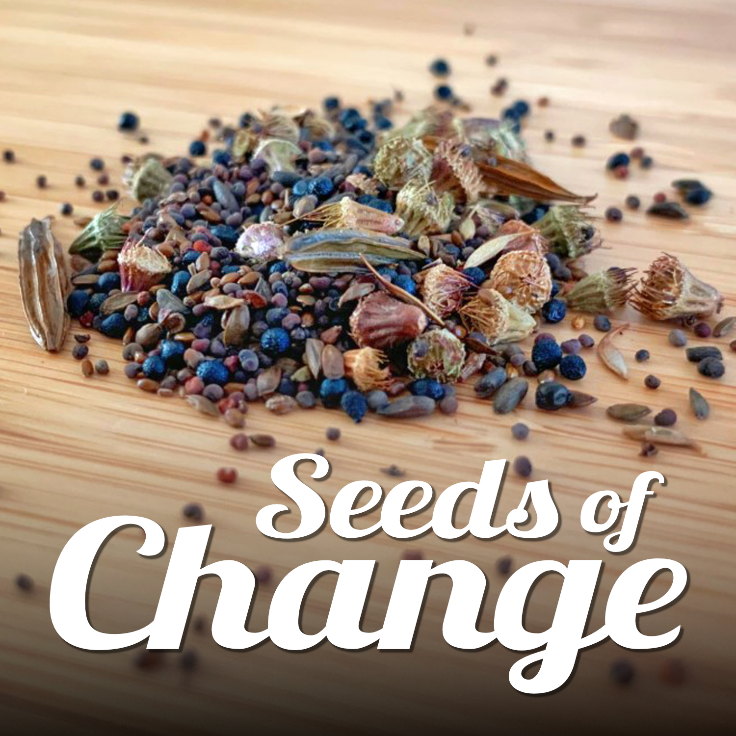 A collection of wildflower seeds pictured on a table. Text reads 'Seeds of Change'